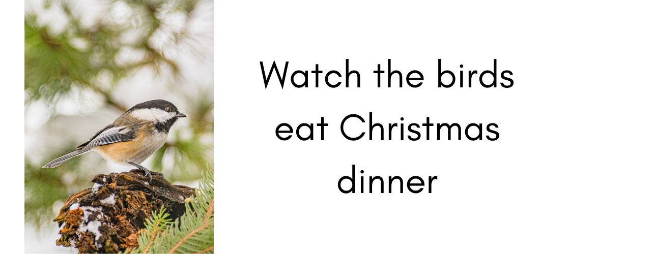 Things to do at Christmas – feed the birds